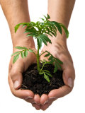 Hands Holding Seedling Planted in Soil Out Towards Viewer Photographic Print by Brooke Whatnall