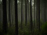 Dense Woodland in Everglades National Park Photographic Print by Raul Touzon