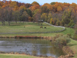 Fall Scenic of Horse Farm and Pond with Canada Geese Photographic Print by George Grall