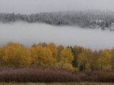 Aspen Trees and Fog after a Brief Snow Fall Photographic Print by William Allen