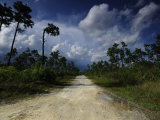 Dirt Road in Everglades National Park Fotografisk tryk af Raul Touzon