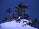 Snow on Flag Trees Photographic Print by Nick Norman
