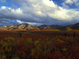 Denali Natioanl Park in Fall Colors Photographic Print by Nick Norman