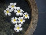 Jasmine Flowers Floating on the Water Surface in a Stone Vessel Fotografisk tryk af David Evans