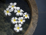 Jasmine Flowers Floating on the Water Surface in a Stone Vessel Photographic Print by David Evans