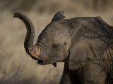 Baby Elephant in Samburu National Park Photographic Print by Michael Nichols