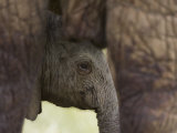 Baby Elephant in Samburu National Reserve Photographic Print by Michael Nichols