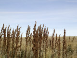Close Up of Prairie Grass Photographic Print by Pete Ryan