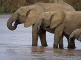 Elephant Group Drinking from a River in Samburu National Park Photographic Print by Michael Nichols