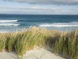 Scenic Hillside of the Beach and Grasses on the Pacific Ocean Photographic Print by Bill Hatcher