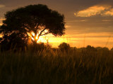 Silhouetted Tree on the Grasslands at Twilight Photographic Print by Roy Toft
