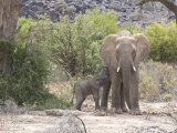 Elephant Feeding Her Newborn Calf Photographic Print by Michael Polzia