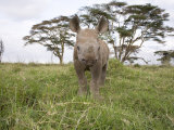 Juvenile Rhinoceros in Samburu National Reserve Photographic Print by Michael Nichols
