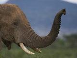 Elephant in Samburu National Reserve Photographic Print by Michael Nichols