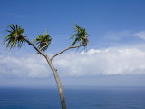 Tree Overlooking the Ocean Photographic Print by John Burcham