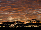Acacia Trees at Sunrise in the Serengeti National Park Photographic Print by Ralph Lee Hopkins