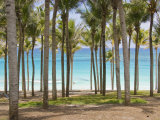 Rows of Palm Trees Line a Tropical Beach in Cancun, Mexico Photographic Print by Mike Theiss