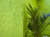 Palm Plant and Green Wall Backdrop Photographic Print by Scott Warren