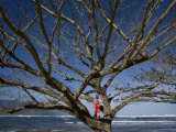 Girl in a Tree on the Beach Photographic Print by John Burcham