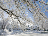 Snow Covered Trees in a Residential Neighborhood Durango Photographic Print by Scott Warren