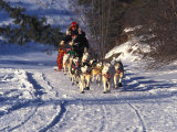 Dog Mushing across Snow Photographic Print by Nick Norman