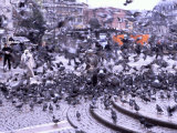 Mass of Birds Gather in a Turkish Square While a Man Throws Food Photographic Print by Gianluca Colla