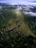 Aerial View of the Mbeli Bai, a Clearing in the Nouabale-Ndoki National Park Photographic Print by Michael Nichols
