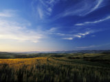 Vast Open Fields in the Beautiful Tuscan Landscape Photographic Print by Gianluca Colla