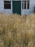 Tall Grasses Growing Up to the Door and Windows of a Building Photographic Print by Kent Kobersteen