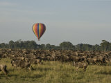 Hot Air Balloon over a Herd of Wildebeest in Masai Mara Photographic Print by Michael Polzia