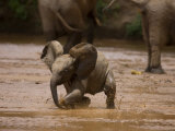 Young Elephant Splashing Through Water Photographic Print by Michael Nichols