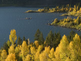 Aspens and Evergreens at Slide Lake on the Gros Ventre River Photographic Print by William Allen