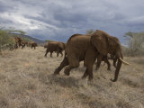Elephant Family on the Move in Samburu National Reserve Photographic Print by Michael Nichols