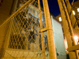 Detail of a Chainlink Fence at Night Photographic Print by Scott Warren
