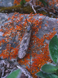 Insect on Lichen Covered Rocks Photographic Print by Nick Norman