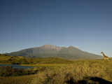 Giraffe Stands in a Landscape with Mt. Meru in the Background Photographic Print by Michael Polzia