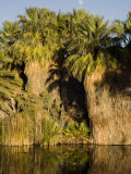 Palm Trees at the Entrance to the Phoenix City Zoo in Arizona Photographic Print by Scott Warren