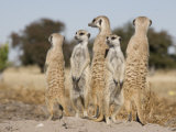 Meerkats on the Edge of the Makgadikgadi Pans Photographic Print by Michael Polzia