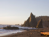 Beach at Sunset in Olympic National Park Photographic Print by Taylor S. Kennedy
