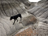 Black Labrador Dog in the Bisti Badlands Wilderness Photographic Print by Scott Warren