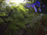 Spider Web in a Garden Photographic Print by Taylor S. Kennedy