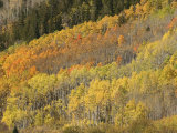 Aspen and Evergreen Trees Surround the Majestic Maroon Bells Photographic Print by Charles Kogod