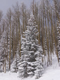 Fresh Snow Tops the Trees in Santa Fe National Forest During Winter Photographic Print by Ralph Lee Hopkins