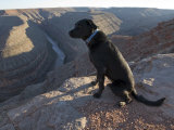 Black Lab Looks into a River Gorge at Goosenecks State Park, Utah Photographic Print by Scott Warren
