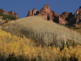 Aspen Trees, Bared and Filled with Leaves, Climb a Mountain Face Photographic Print by Charles Kogod