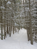 Ski Trail on a Winter Day Photographic Print by Taylor S. Kennedy