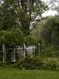 Lush Vegetation Growing around a Section of White Picket Fence Photographic Print by Rebecca Hale
