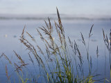 Close Up of Grass Growing on the Lake Shore Photographic Print by Hannele Lahti