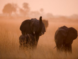 Three Elephants in the Grass of the Savannah Photographic Print by Beverly Joubert