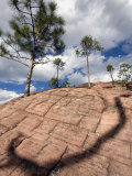 Clouds and Pine Trees Near the Summit of Thousand Turtle Mountain Photographic Print by Scott Warren